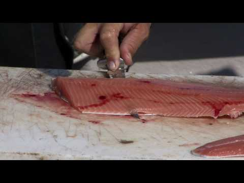 Filleting Freshwater Fish Video