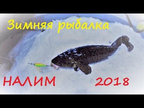 Зимняя рыбалка / НАЛИМ 2018 / Winter fishing / BURBOT 2018