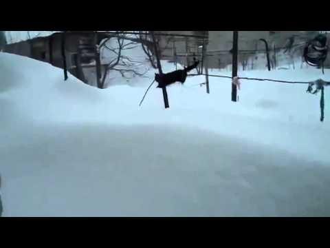 Котэ и много снега Юмор! Прикол! Смех