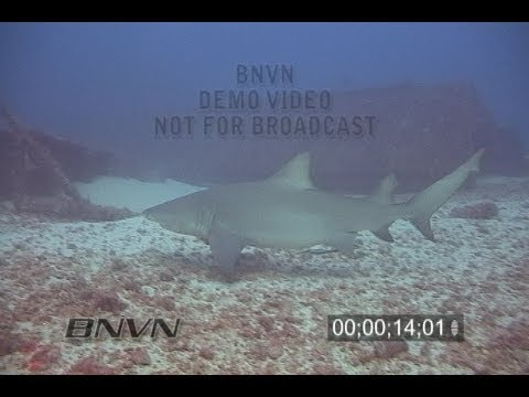 2/10/2007 West Palm Beach, FL Lemon Shark Video