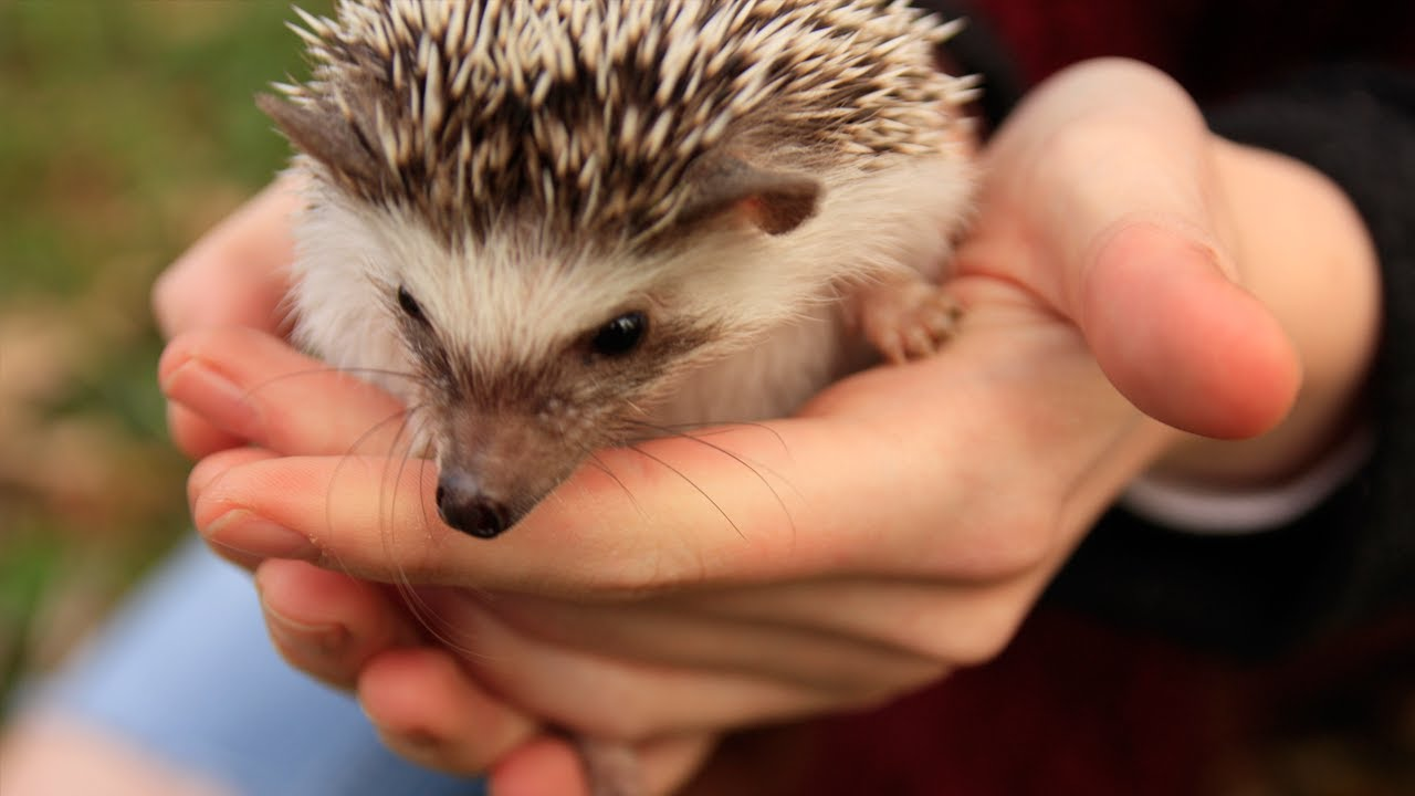 Names For Hedgehogs