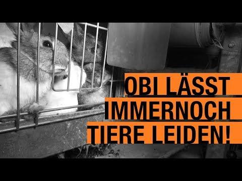 OBI BRICHT Versprechen und verkauft immer noch leidende Tiere / PETA