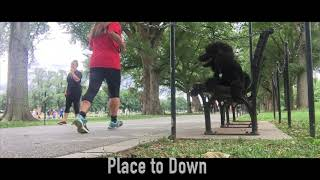 10 Month Old Standard Poodle, Willow | Standard Poodle Off Leash Dog Training | Off Leash K9