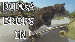Cat Didga 'Drops In' at Skateboard Parks! Go Didga Go!