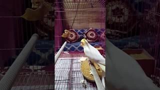 MUST WATCH!! Cute Bird eating Popcorn using his paw!!