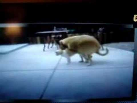 A Dog And Cat Have Some Good Sex. video