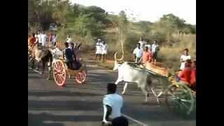 Mattu vandi Panthayam  Bullock Cart Race  Maamadur