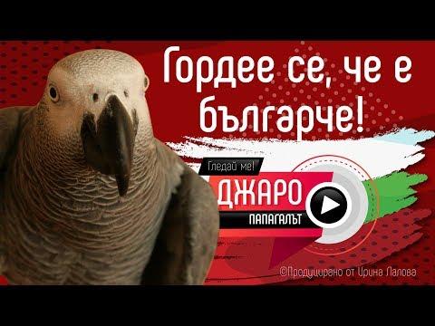Папагалът Джари - песни, танци.. Гордее се, че е българче!