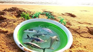 Sea & Water Animals Learn Names Dolphins and Whales & Shark for Children Play Time for Kids