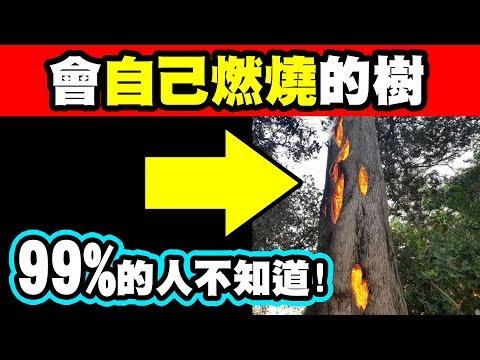 7個超能力植物 你聽過會自己燃燒的樹嗎?