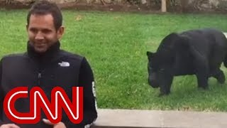 Panther sneaks up behind man and then ...