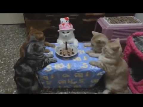 Котики-собачки и другие животные!!!