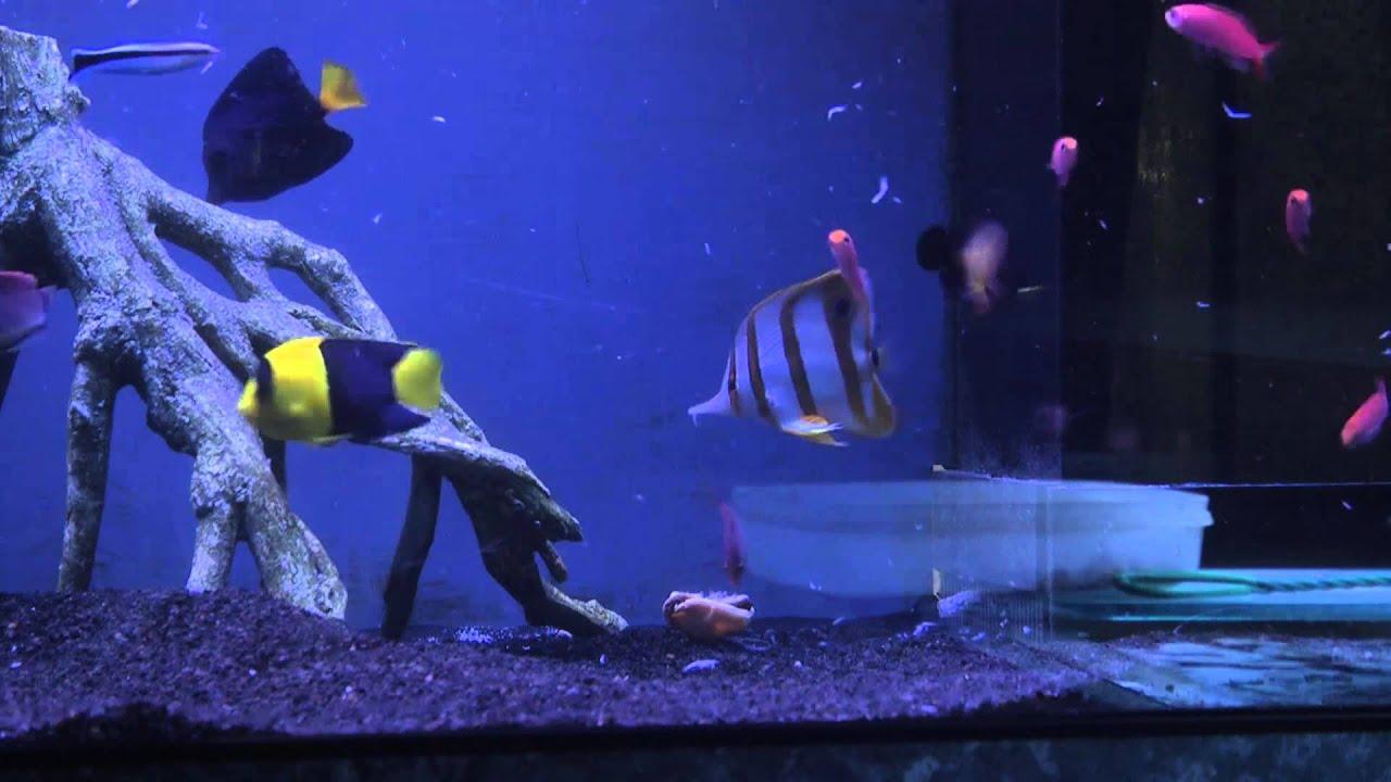 aquavideomag 21 les poisson d eau de mer partie 2