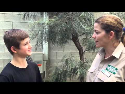Mahogany Glider interview with Alice at Currumbin Wildlife Sanctuary