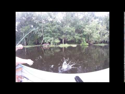 Fly fishing on the St Johns River 7-5-14