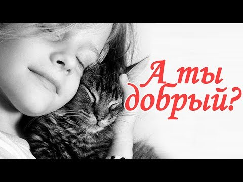 Добрый ли Вы человек? Тест с веселым котом #Джемом