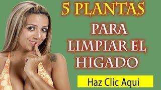 5 Plantas para Limpiar el Higado|Medicina Natural para el higado, Cardo Mariano,Menta