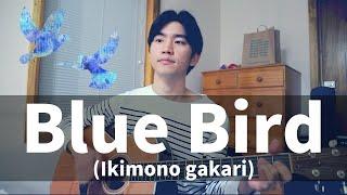 Blue Bird (Ikimono gakari) Cover【Japanese Pop Music】