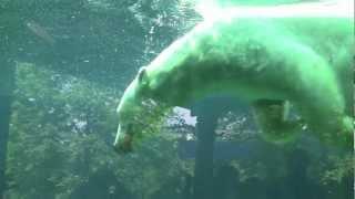 Polar Bear Keeper Chats @ The Maryland Zoo