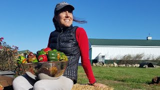 OFF GRID~ how we PRESERVE the HARVEST