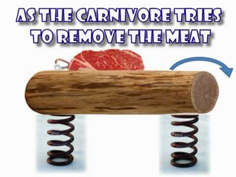carnivore rodeo-enrichment ideas for our animals
