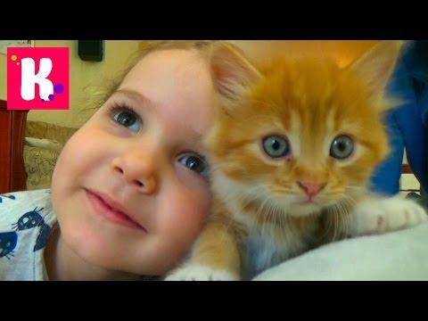 Кошка Мурка питомец Кати и Макса VLOG покупаем все необходимое для кошек Kittie care cat pets sets