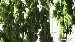LabCare Topic: CBN: Cannabinol (Medical Cannabis Compound) Video Explanation