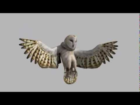 Fly Like a Bird 4 - A Look at the Barn Owl