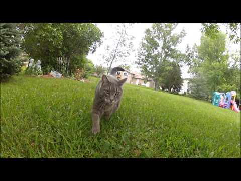 bacterial infection in cats stomach