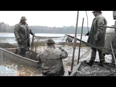 Výlov - Kravský rybnik 2011