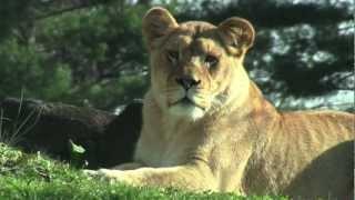 New Lioness Badu On Exhibit