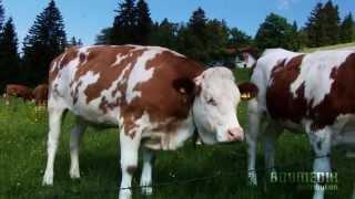 Volkstümliche Heimatmelodien - Der Kreuztaler (Friedrich Finkel Und Seine Musikanten)