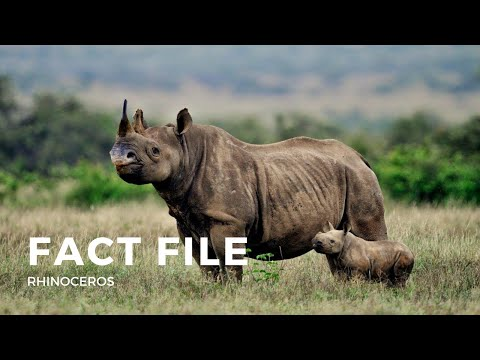 Rhinoceros fact file - Mammals