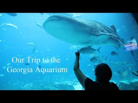 The Georgia Aquarium - Our Trip to Atlanta
