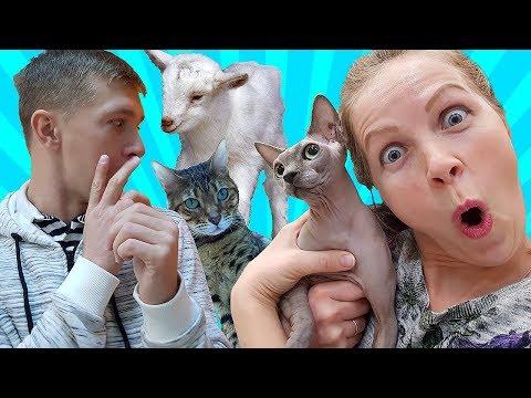 ЛЫСАЯ КОШКА ШОКИРОВАЛА маму Милана в КЛЕТКЕ С ЛИСОЙ и другие животные обед во вьетнамском ресторане