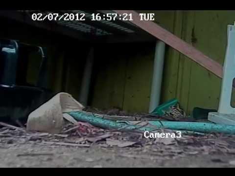 Chicks Gone Wild video