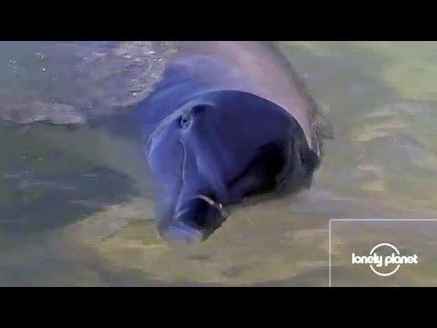 The dolphins of Monkey Mia, Australia - Delfinek, Ausztrália