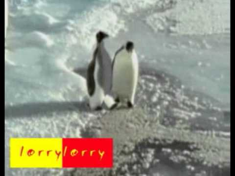 Пингвины тоже с юмором.mp4