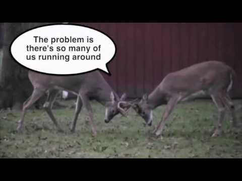 How different communities control deer populations