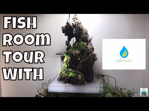 H20 Plants Fish Room Tour Aquarium Fish Room VLOG