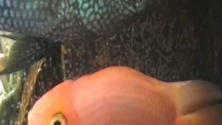 Vídeo 17 de ABN