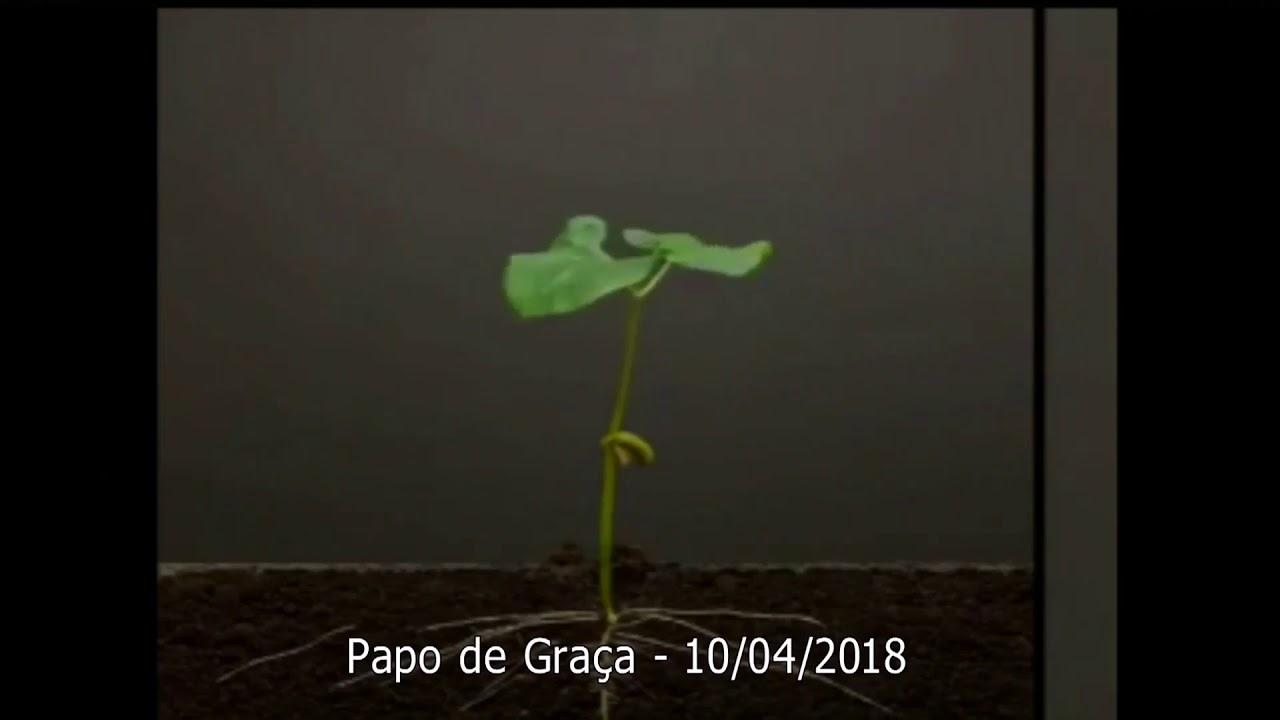 As Raízes que precedem o crescimento da Vida!
