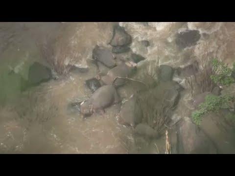DRAMA UN THAILAND: Elefantenherde will Kalb retten und ertrinkt