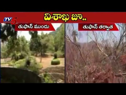 Visakhapatnam Zoo Park | Before Cyclone after Cyclone