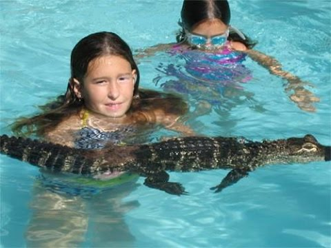 Zoo Renting Out LIVE ALLIGATORS - For Children's Parties!