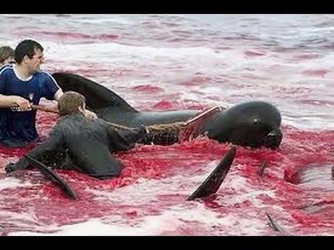 animales en peligro de extincion 16