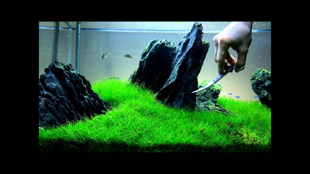 Just Aquascaping - Flowgrow Aquascaping Scissors - YouTube