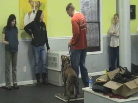 Aggressive Pitbull - Atlanta Dog Training