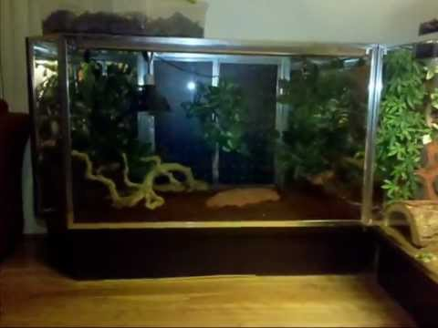 Red Tail Boa Enclosure Red Tail Boa Habitat Update