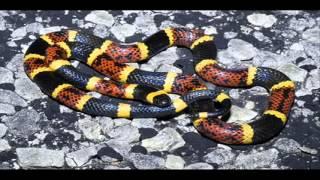 Video clip Top 10 loài rắn đẹp nhất thế giới